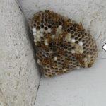 Destruction nid de guêpe Saint-Leu-d'Esserent et frelons Asiatique