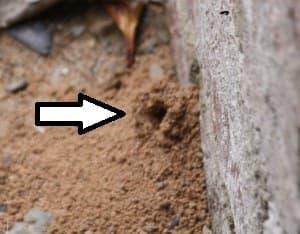 nid de guêpes enterré