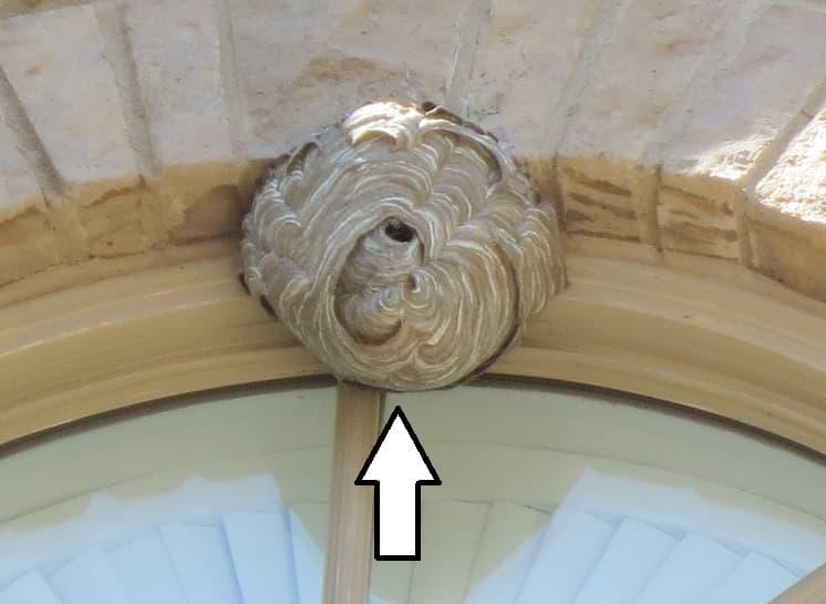 Traitement nid de guêpes nogent sur Oise
